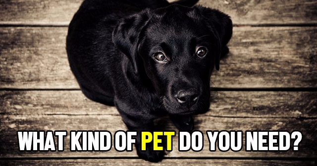 What Kind of Pet Do You Need?
