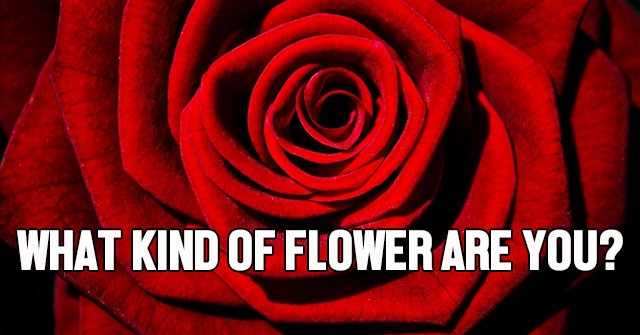 What Kind Of Flower Are You?