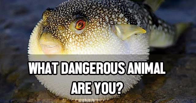 What Dangerous Animal Are You?