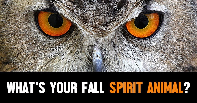 What's Your Fall Spirit Animal?