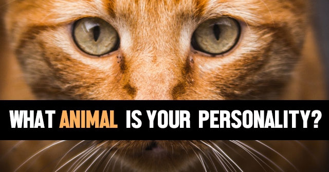 What Animal Is Your Personality?
