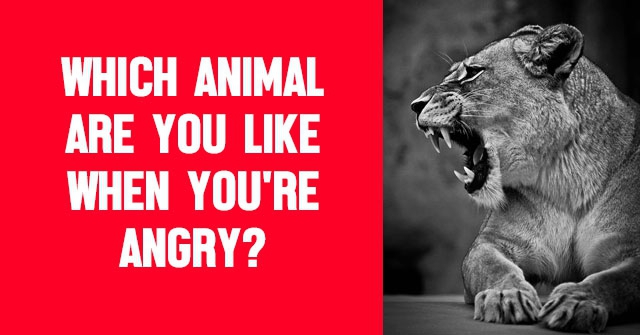 Which Animal Are You Like When You're Angry?