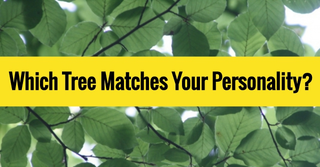 Which Tree Matches Your Personality?