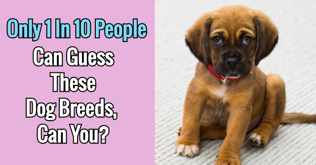 Only 1 In 10 People Can Guess These Dog Breeds, Can You?