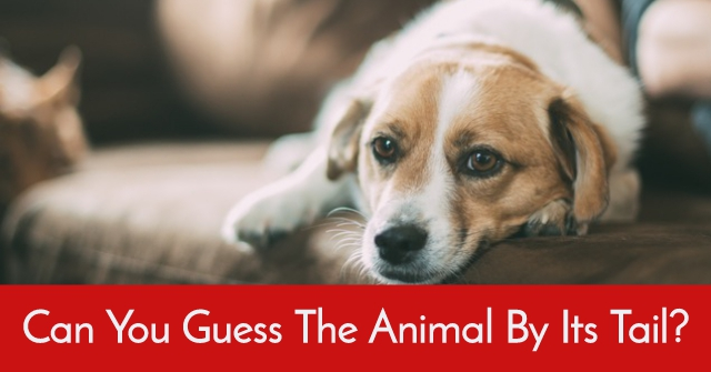 Can You Guess The Animal By Its Tail?