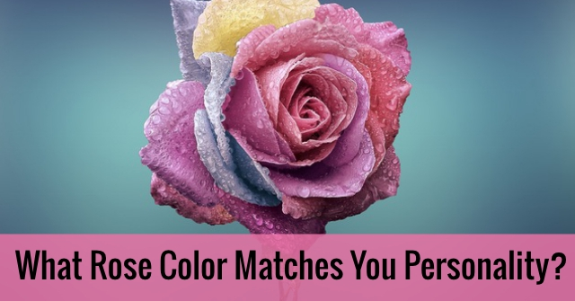 What Rose Color Matches You Personality?