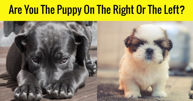 Are You The Puppy On The Right Or The Left?