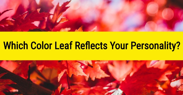 Which Color Leaf Reflects Your Personality?