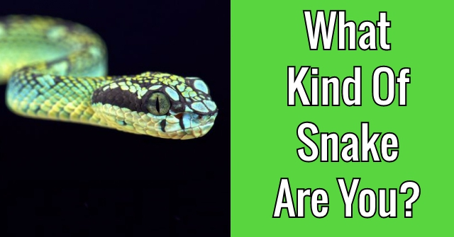 What Kind Of Snake Are You?