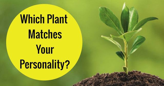 Which Plant Matches Your Personality?
