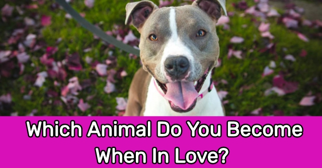 Which Animal Do You Become When In Love?