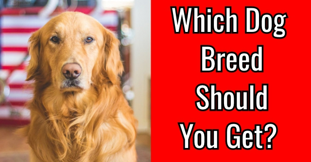 Which Dog Breed Should You Get?