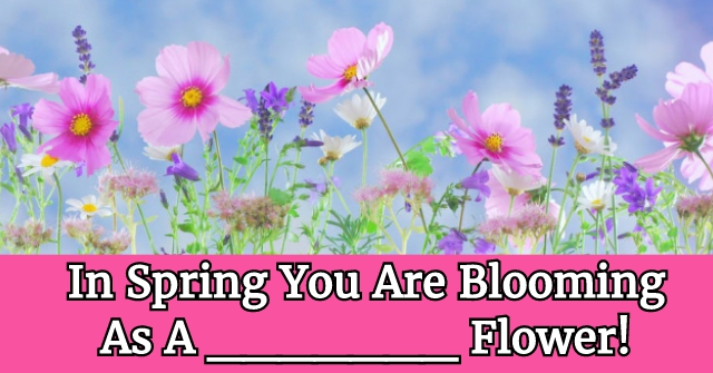 In Spring You Are Blooming As A __________ Flower!