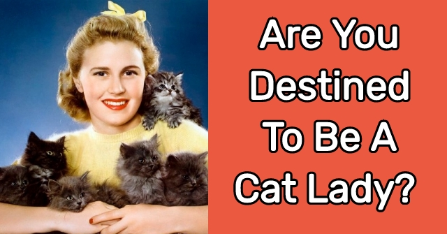 Are You Destined To Be A Cat Lady?