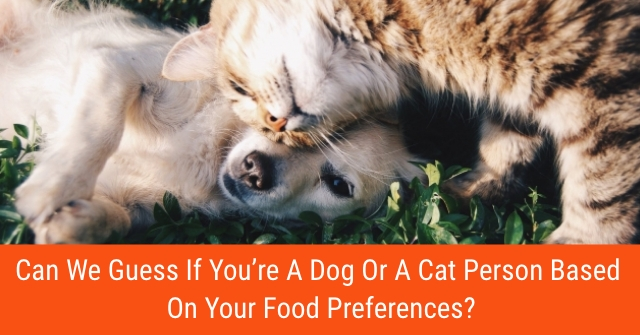 Can We Guess If You're A Dog Or A Cat Person Based On Your Food Preferences?