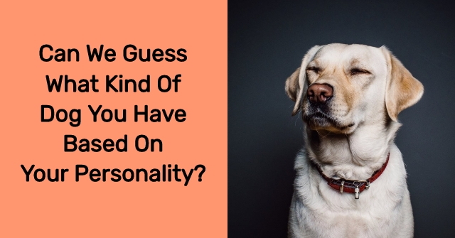 Can We Guess What Kind Of Dog You Have Based On Your Personality?