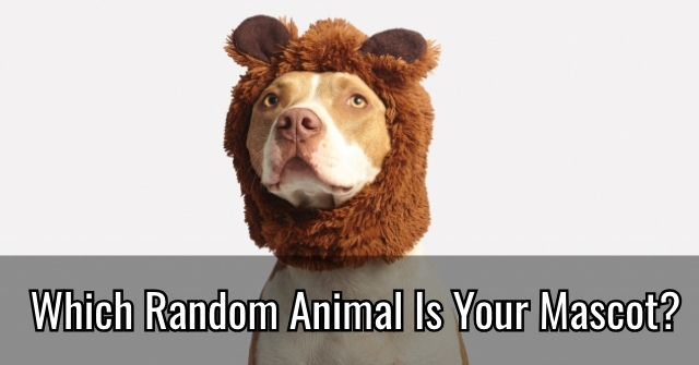 Which Random Animal Is Your Mascot?