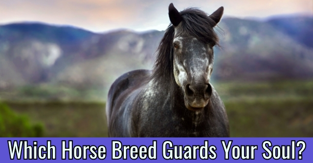 Which Horse Breed Guards Your Soul?