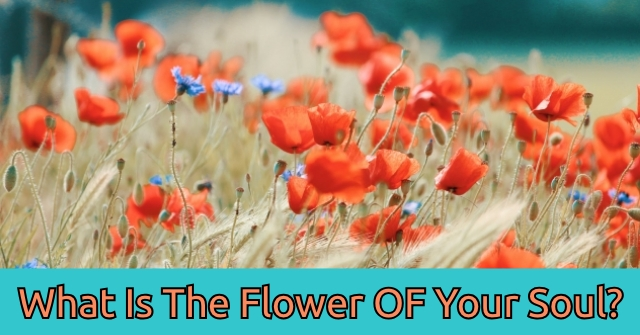 What Is The Flower OF Your Soul?