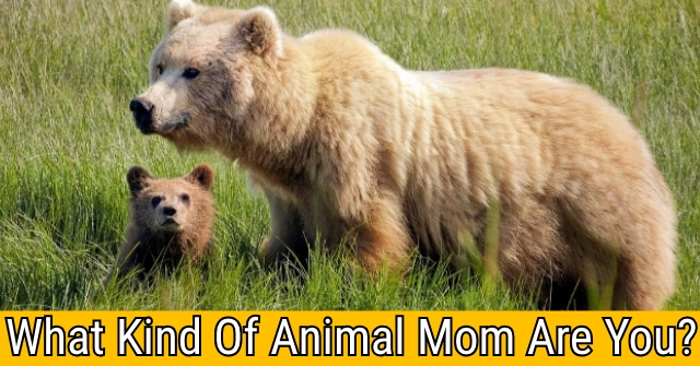 What Kind Of Animal Mom Are You?