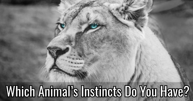 Which Animal's Instincts Do You Have?