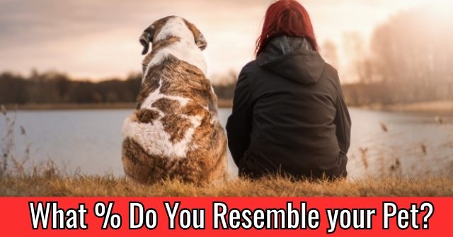 What % Do You Resemble your Pet?