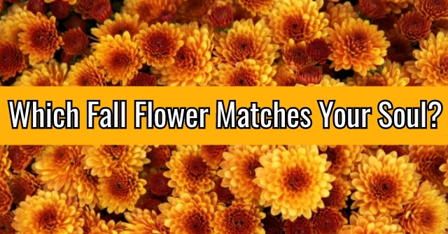 Which Fall Flower Matches Your Soul?
